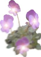 Décrets et visualisations pour la Flamme Violette Untitl10