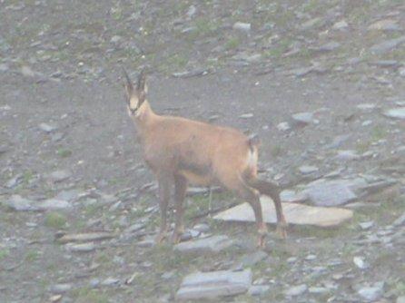 La faune en Haute-Tarentaise Pict5911