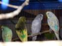 Rumba et Mambo, Malibu et Coco  P1050512