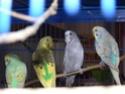 Rumba et Mambo, Malibu et Coco  P1050513
