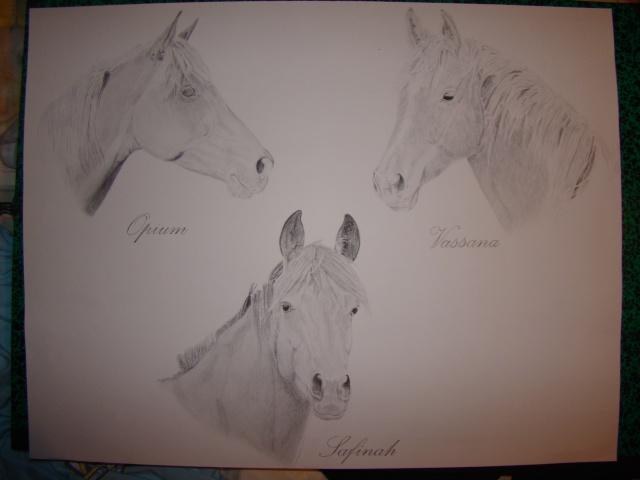Dessin/portrait de vous ou votre cheval Dsc06110