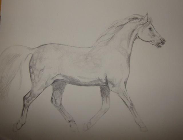 Dessin/portrait de vous ou votre cheval Ps10