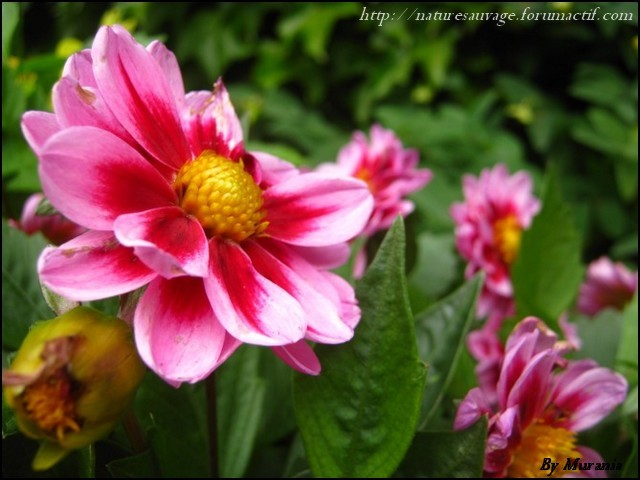 Mes photos de fleurs et d'animaux ! Img41811