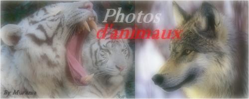 Mes photos de fleurs et d'animaux ! Sans_t31