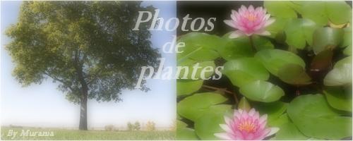 Mes photos de fleurs et d'animaux ! Sans_t32