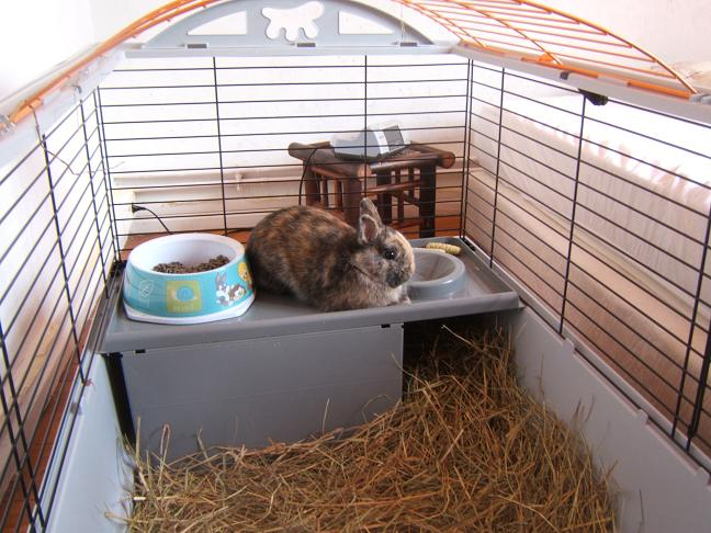 diego 5/6 mois recherche une famille (lapin) Diego_11