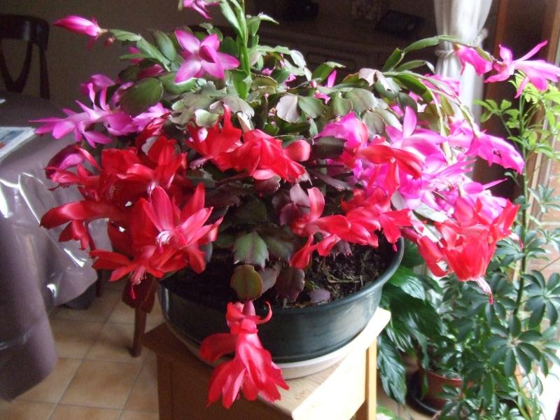 Le jardin de Joséphine.. Cactus14