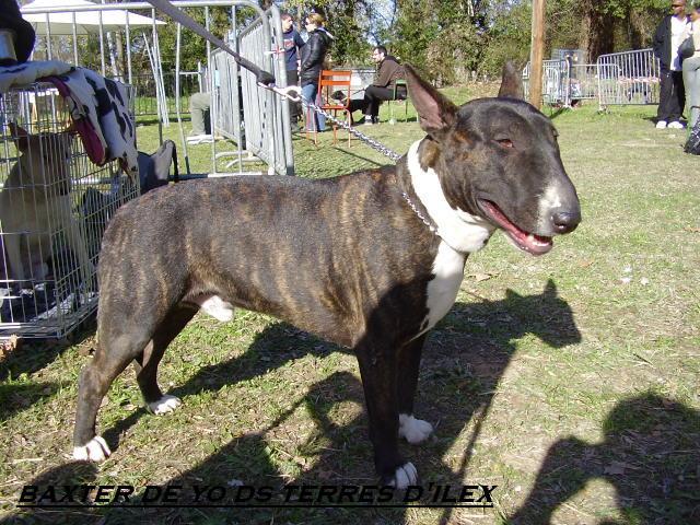 ilex - né le 14 09 2006 aux TerresD'Ilex fils de rezzo et houchane P3170024