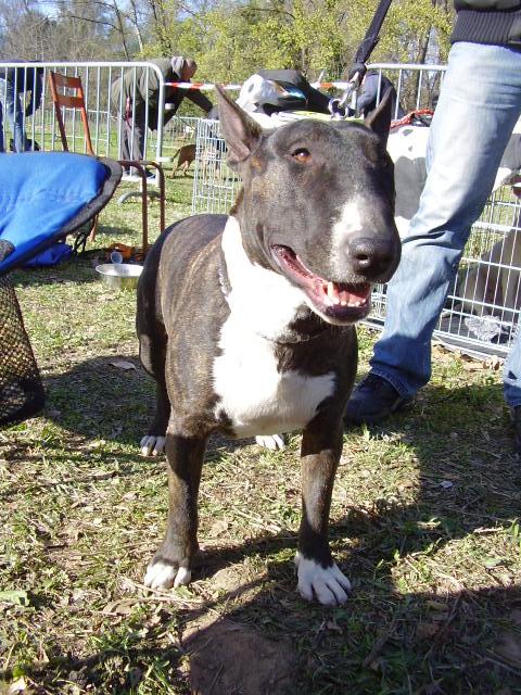 ilex - né le 14 09 2006 aux TerresD'Ilex fils de rezzo et houchane P3170025