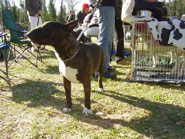 ilex - né le 14 09 2006 aux TerresD'Ilex fils de rezzo et houchane P3170033