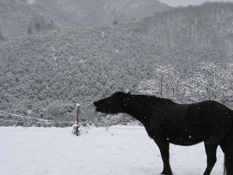 Nouveau concours photos ! La neige, vous, vos chevaux ! - Page 2 Naomi-10
