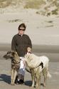 bébés irish wolfhound levrier irlandais LOF Dsc00310