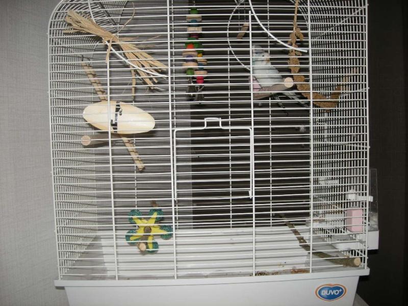 Les jouets de Kitty et Fidji 00116