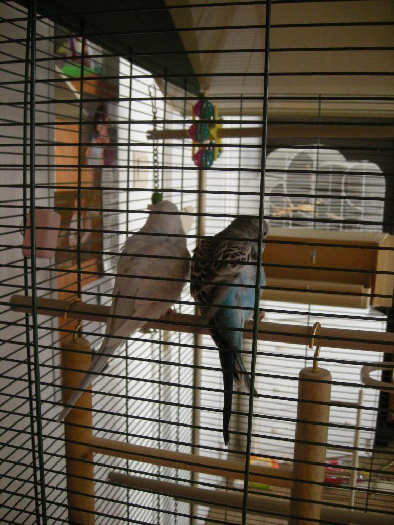 La nouvelle cage de Kitty et Fidji 00117