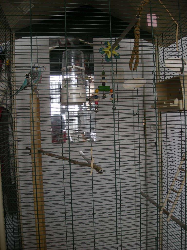 La nouvelle cage de Kitty et Fidji 00215