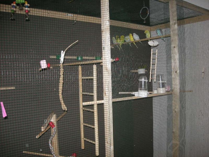 Mon mari m'a construit une volière d'intérieur 00912