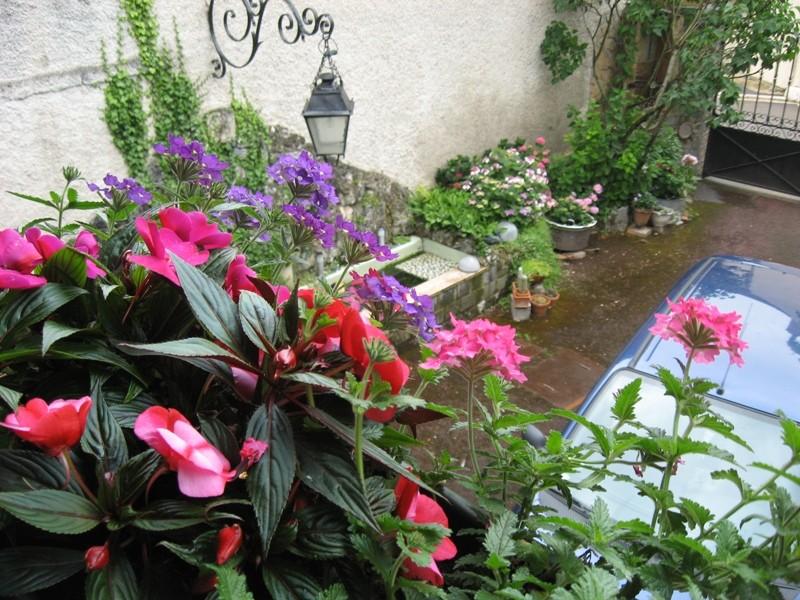 mon jardin pluvieux Img_4431