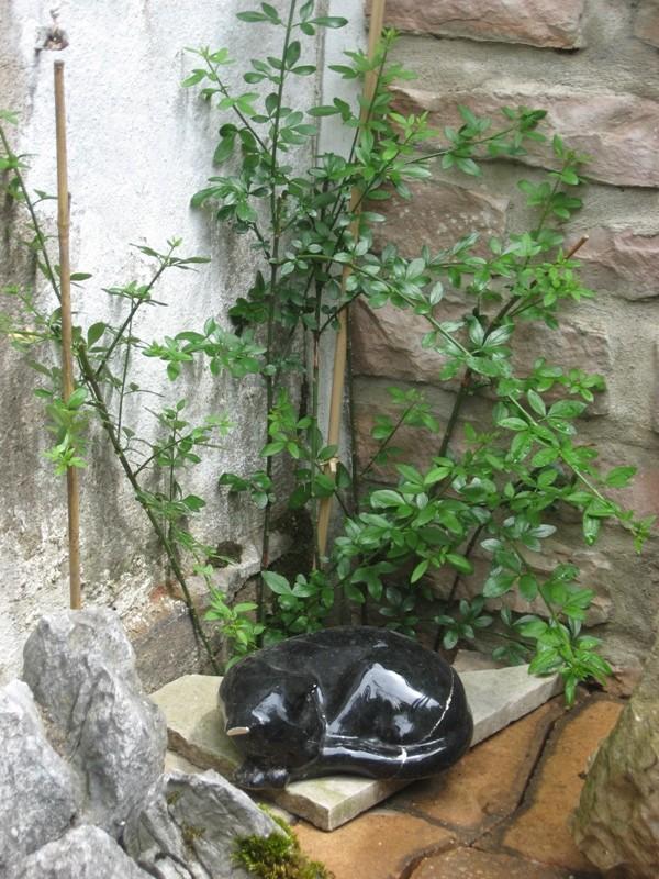 mon jardin pluvieux Img_4433