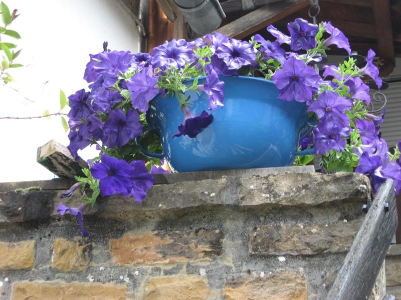 mon jardin pluvieux Img_4434