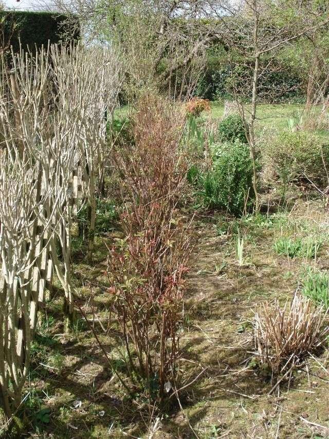 le jardin de Giroflée 2 - Page 2 12_04010