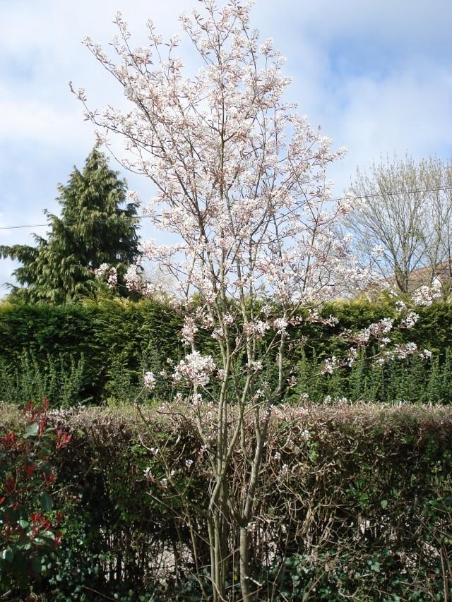 le jardin de Giroflée 2 - Page 2 12_04012