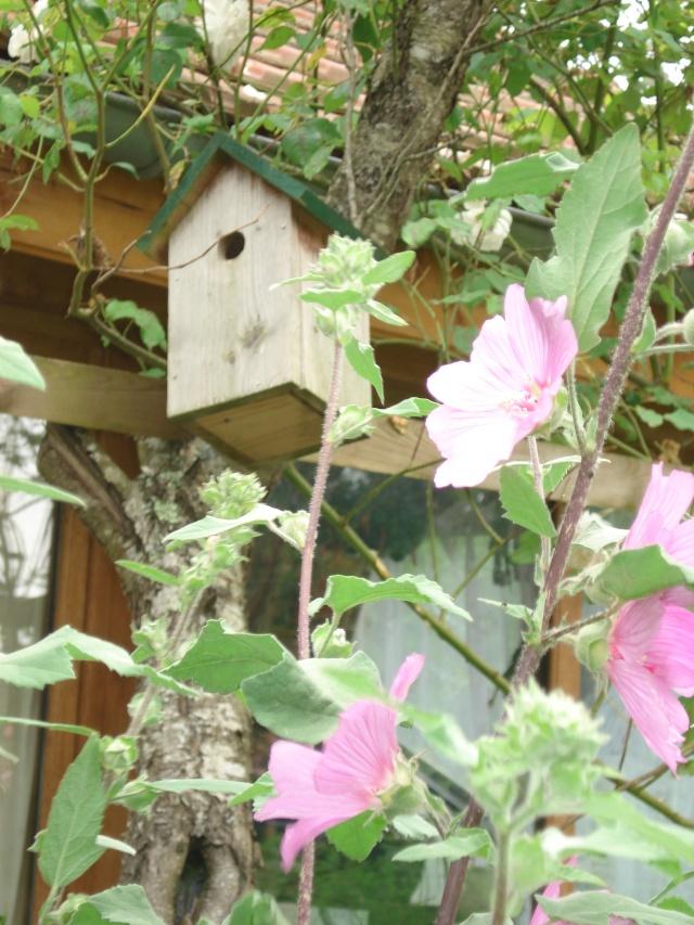 bb mésanges ont quitté le nid 22juin71