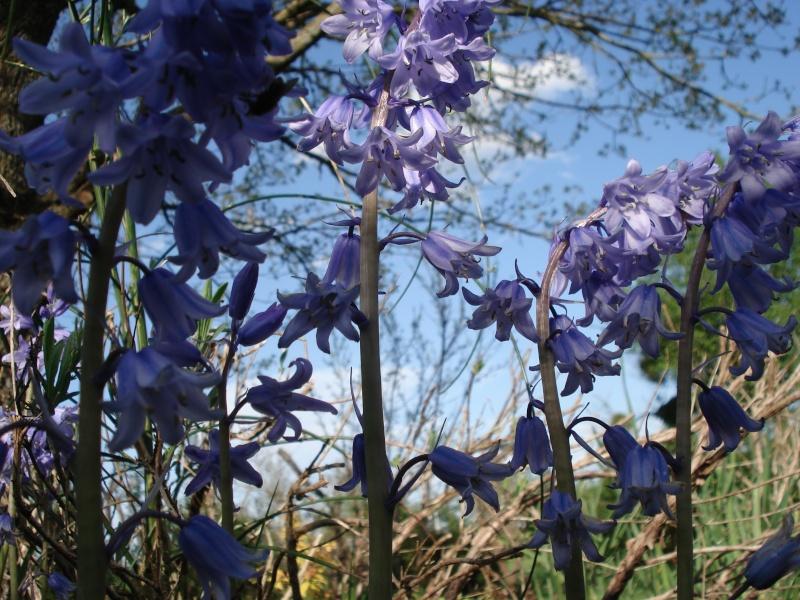 Thème du mois de Mai 'Le renouveau du printemps' 3_mai_46