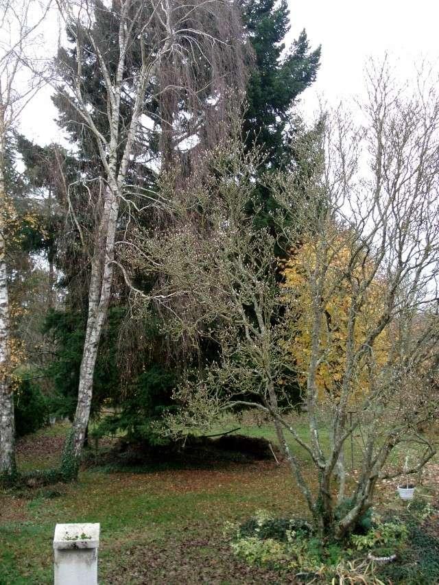 le nouveau jardin de Giroflée 511_0216