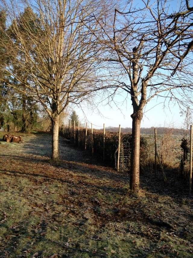 le nouveau jardin de Giroflée 511_2212