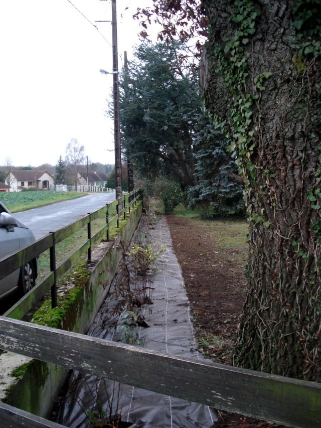 le nouveau jardin de Giroflée 511_2510