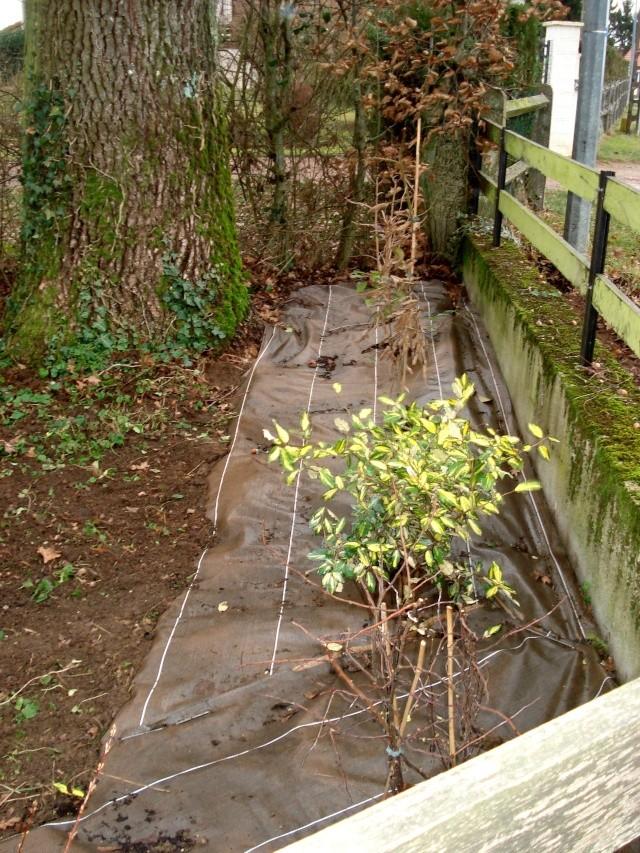 le nouveau jardin de Giroflée 511_2511