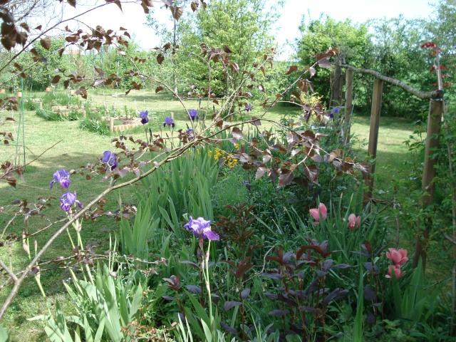 le jardin de Giroflée 2 - Page 4 6_mai_14