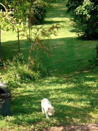 le nouveau jardin de Giroflée 762min10