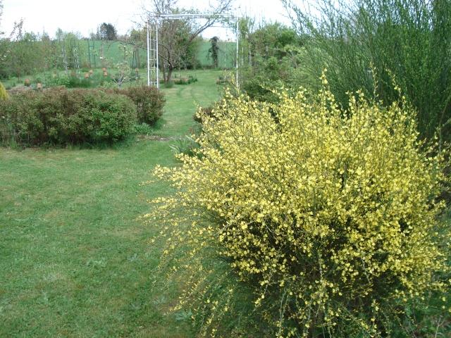 le jardin de Giroflée 2 - Page 4 Bourge14