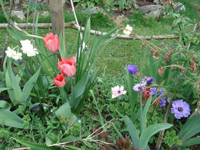 le jardin de Giroflée 2 - Page 4 Bourge15