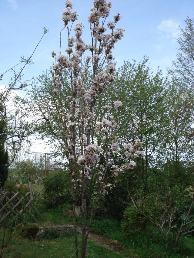 le jardin de Giroflée 2 - Page 4 Bourge16