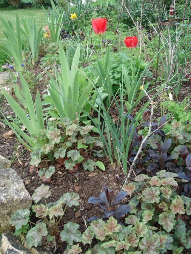 le jardin de Giroflée 2 - Page 4 Bourge19