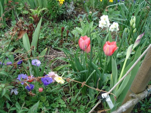 le jardin de Giroflée 2 - Page 4 Bourge24