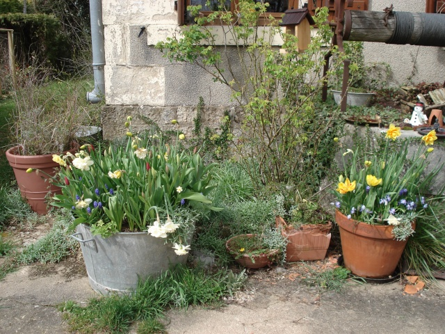 le jardin de Giroflée 2 - Page 2 Jardi106