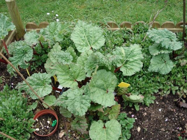 le jardin de Giroflée 2 - Page 3 Jardin22