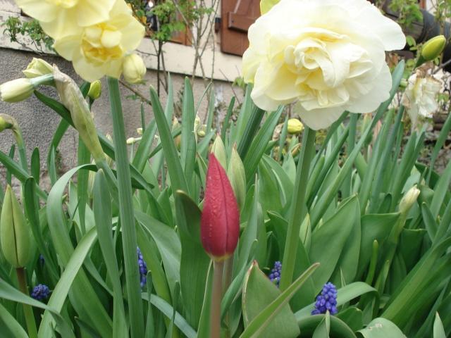 le jardin de Giroflée 2 Jardin59