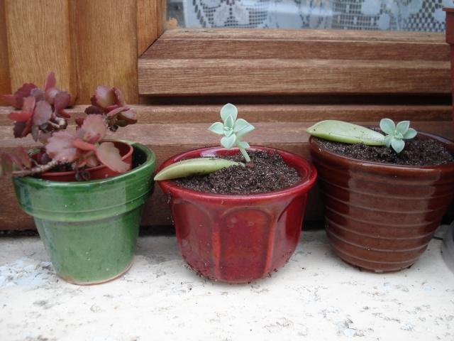 petites boutures Plants10