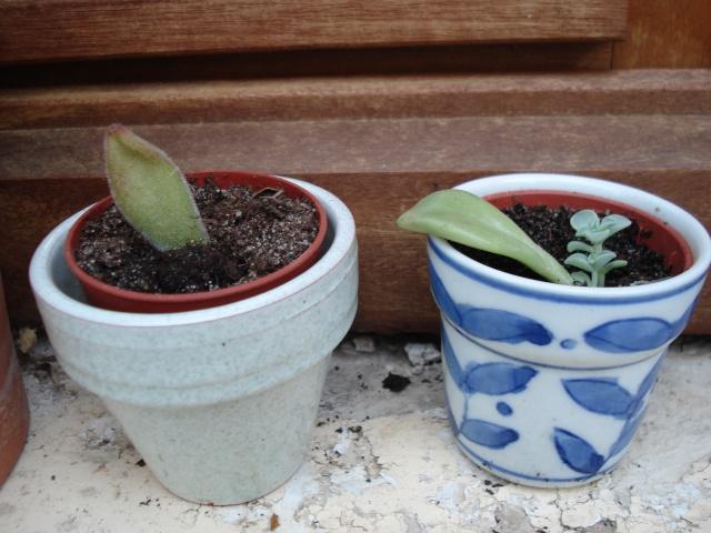 petites boutures Plants11
