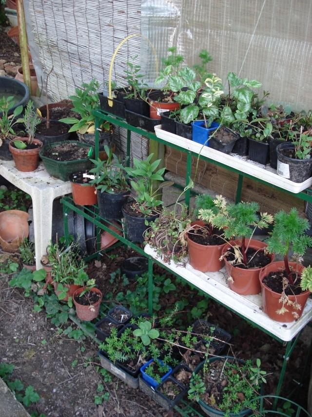 le jardin de Giroflée 2 - Page 4 Plants12