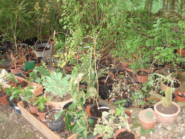 le jardin de Giroflée 2 - Page 4 Plants13