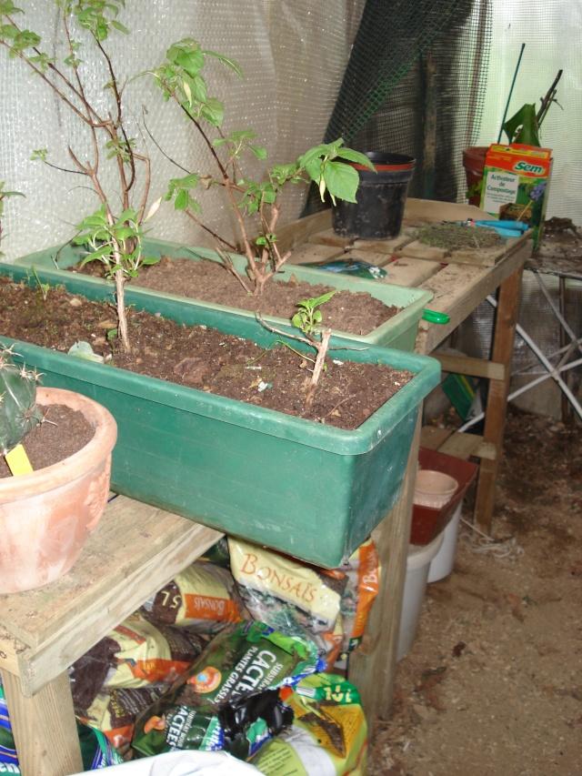 AVIS A LA POPULATION !!!!!! Plants19