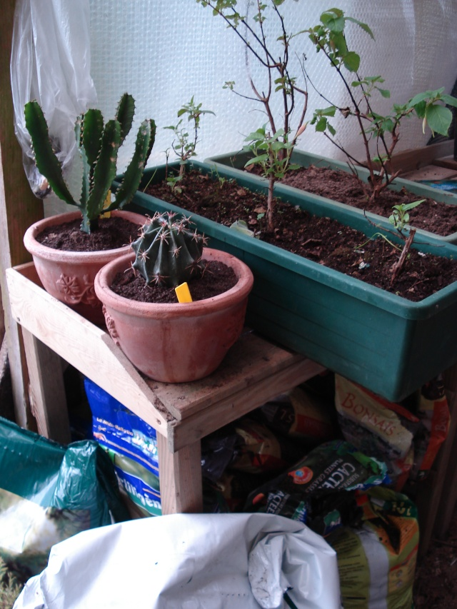 AVIS A LA POPULATION !!!!!! Plants20