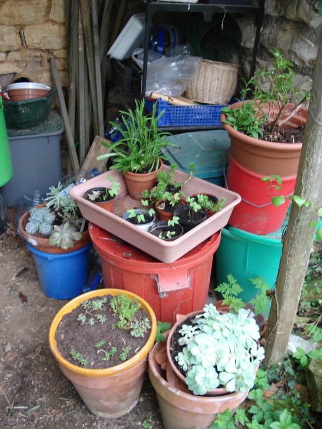 AVIS A LA POPULATION !!!!!! Plants22