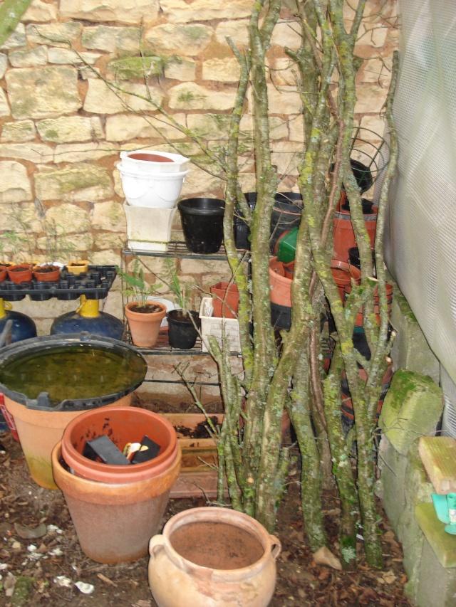 AVIS A LA POPULATION !!!!!! - Page 2 Plants24