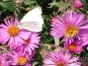 le jardin de Giroflée 2 - Page 18 2209_020